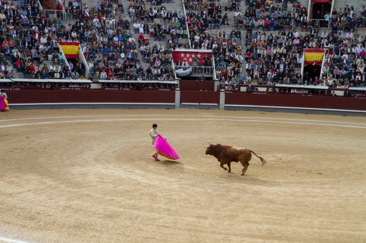 Bullfighting_016