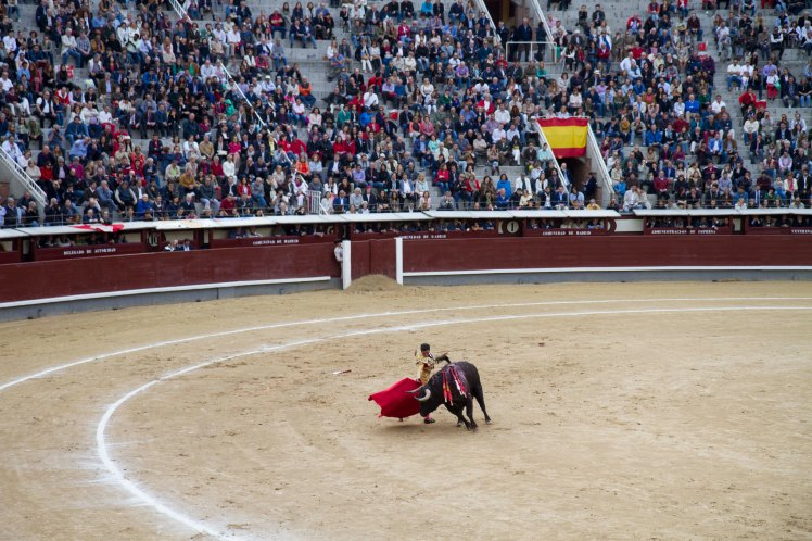 Bullfighting_041